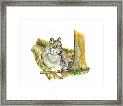 Watching Wolf Framed Print by Peter Edward Green