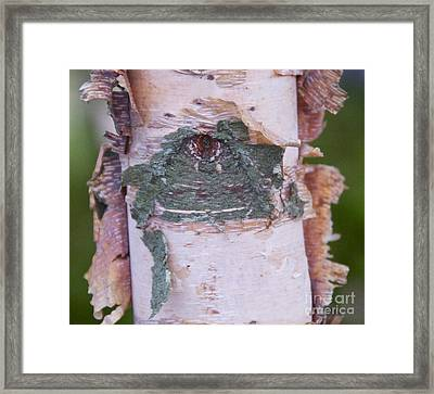 Framed Print featuring the photograph Watching You by Cindy Lee Longhini