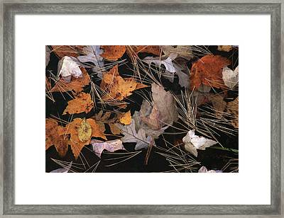 Water And Leafs  Framed Print by Mike Stouffer