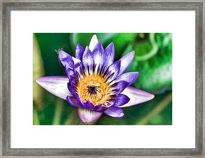 Water Color Lily Framed Print
