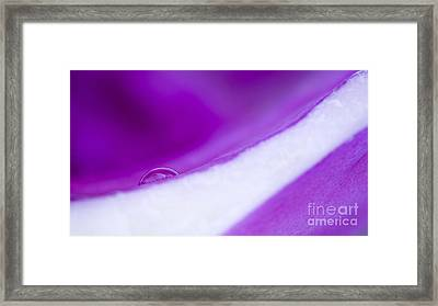 Water Drop In Purple Framed Print by Odon Czintos