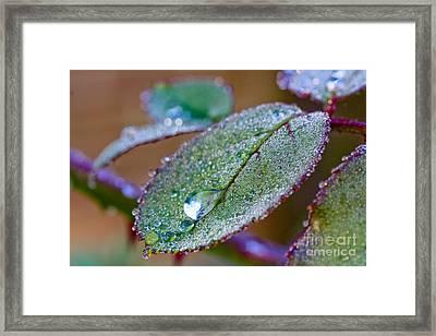 Water Drop Framed Print by Jo