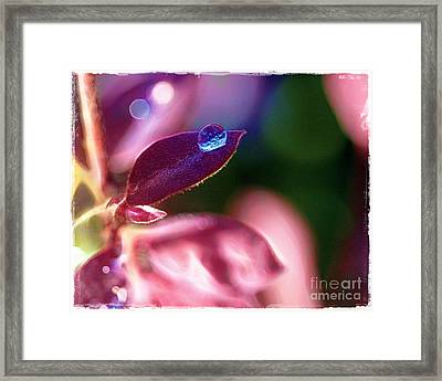 Water Drop Framed Print by Judi Bagwell