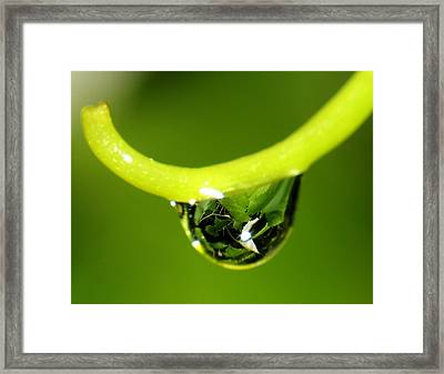 Water Droplet On Grapevine Framed Print