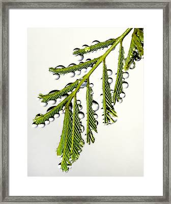 Water Droplets 2 Framed Print by Jim Painter