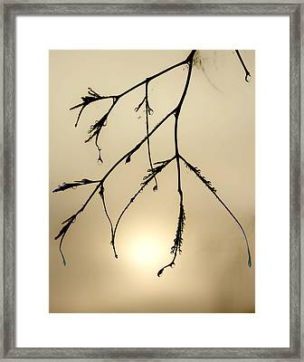 Water Droplets Framed Print by Jim Painter