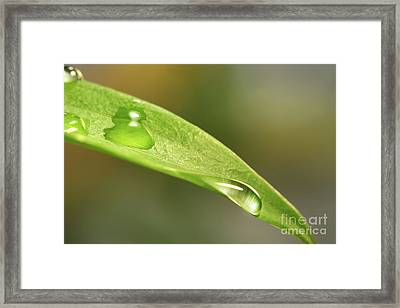 Water Droplets On A Lily Leaf Framed Print by Sandra Cunningham