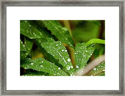 Water Drops Framed Print by Ernestas Papinigis