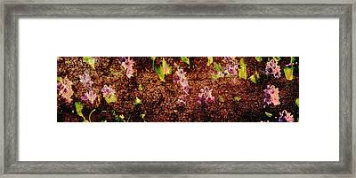 Water Flowers Vietnam Framed Print by Skip Nall