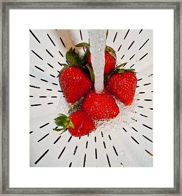 Framed Print featuring the photograph Water For Strawberries by David Pantuso