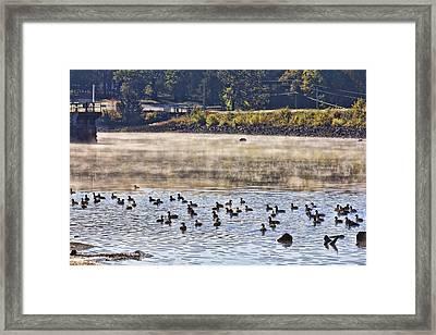 Water Fowl At Lake Wilhelmina Arkansas Framed Print by Douglas Barnard