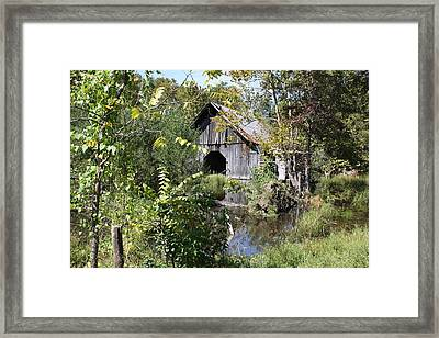 Water Garden Framed Print by James Collier