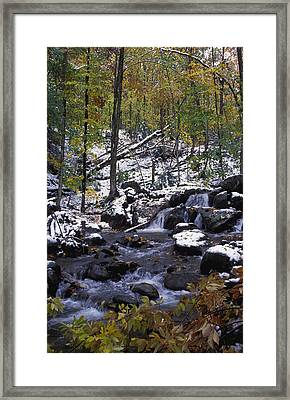 Water In Forest Framed Print