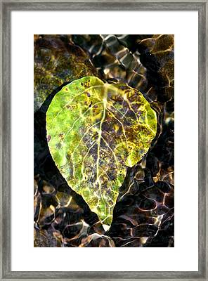 Framed Print featuring the photograph Water Leaf by Scott Holmes