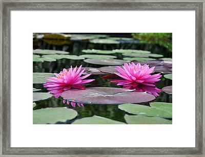 Water Lilies Framed Print by Bill Cannon