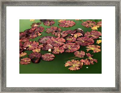 Water Lilies Framed Print by Bonnie Bruno
