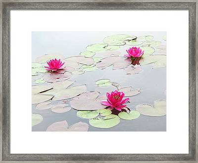 Water Lilies In The Morning Framed Print by Michael Taggart