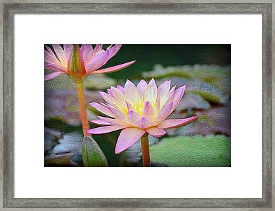 Water Lilies Framed Print by Steven Michael
