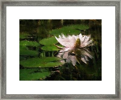 Water Lilly Framed Print by Heiko Mahr