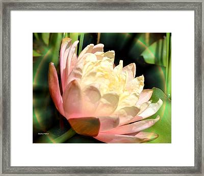 Water Lilly In Bloom Framed Print by Maria Urso