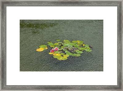 Water Lilly In Rain -2 Framed Print by Muhammad Hammad Khan