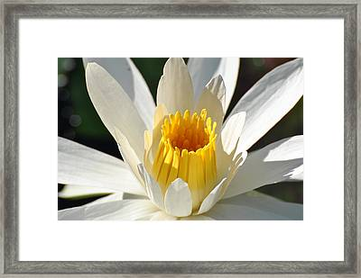 Framed Print featuring the photograph Water Lilly by Jodi Terracina