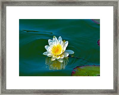 Water Lily 4 Framed Print by Julie Palencia