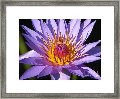 Water Lily 6 Framed Print by Eva Kaufman