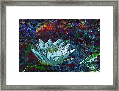 Water Lily Abstract Framed Print by Phyllis Denton