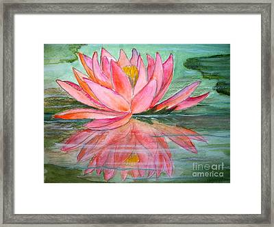 Water Lily Framed Print by Carol Grimes