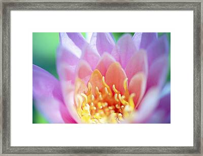 Water Lily Center Framed Print by Kicka Witte