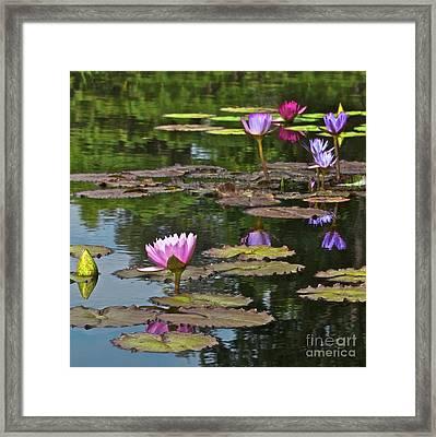 Water Lily Jewels Framed Print by Crystal Garner