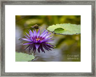 Water Lily Kissing The Water Framed Print by Sabrina L Ryan