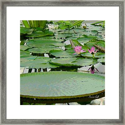 Water Lily Land IIi Framed Print by Suzanne Gaff