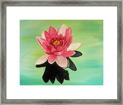 Water Lily Framed Print by Laura Evans