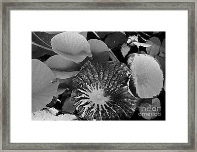 Framed Print featuring the photograph Water Lily Leaf by Jasna Gopic
