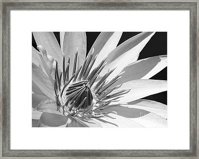 Water Lily Macro In Black And White Framed Print by Sabrina L Ryan