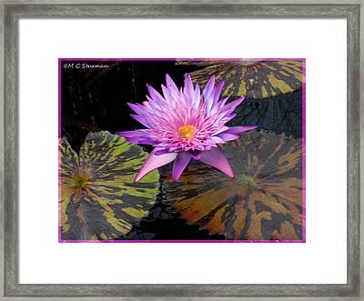 Water Lily Magic Framed Print by M C Sturman