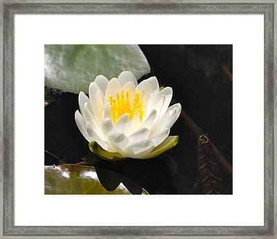 Framed Print featuring the photograph Water Lily by Mary McAvoy