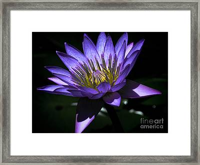 Water Lily  Reveal Framed Print by Karen Lewis
