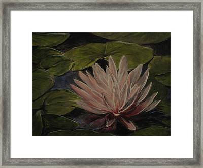 Water Lily Framed Print by Sherry Robinson