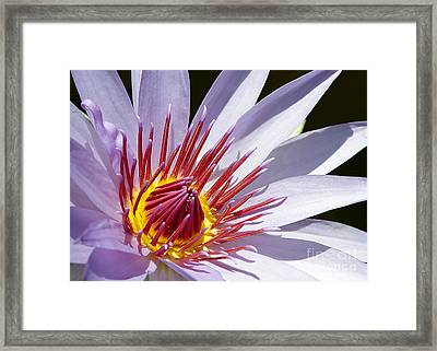 Water Lily Soaking Up The Sun Light Framed Print by Sabrina L Ryan