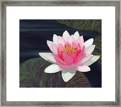 Water Lily Framed Print by Tim Stringer