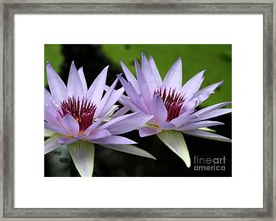 Water Lily Twins Framed Print by Sabrina L Ryan