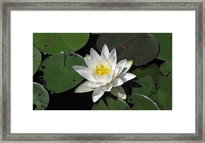 Water Lily Framed Print by Waldemar Okon