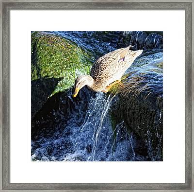 Water Slide Framed Print by Linda Dunn