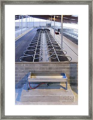 Water Trough And Cattle Cubicles Framed Print