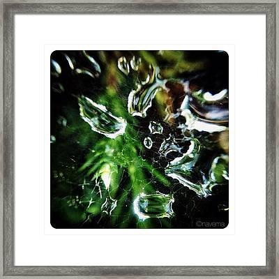 Water Web Framed Print