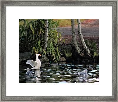 Waterbirds Framed Print by Billie-Jo Miller