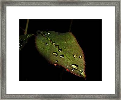 Watered-leaf Framed Print by Rosvin Des Bouillons